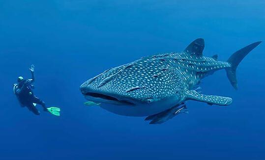 大海中点灯的动物